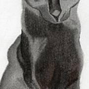Black Cat Art Print by Bav Patel