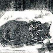 Black Cat Monoprint-2 Art Print