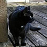 Black Cat On Porch Art Print