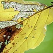 Black Cherry Leaf Art Print