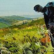 Black Cow Dartmoor Art Print