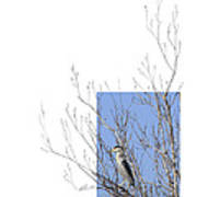 Black-crowned Night-heron Art Print