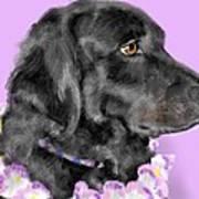 Black Dog Pretty In Lavender Art Print