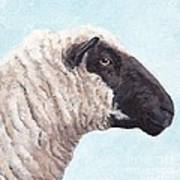 Black Face Sheep Art Print