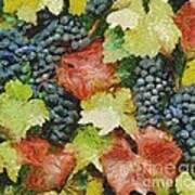 Black Grapes Art Print