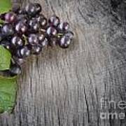 Black Grapes Art Print