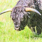 Black Highland Cattle Bull Art Print