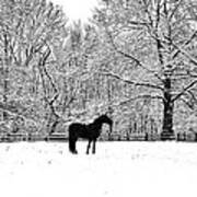 Black Horse In The Snow Art Print
