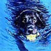 Black Lab  Blue Wake Print by Molly Poole