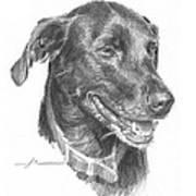 Black Lab Pencil Portrait Art Print