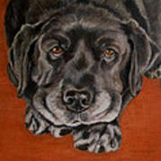 Black Labrador Rests Head Rescue Dog Art Print
