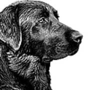 Black Labrador Retriever Dog Monochrome Art Print