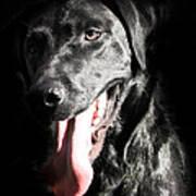 Black Labrador Retriever Art Print by Paulina Szajek