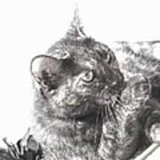 Black N White Cat Art Print