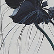 Black Orchid Art Print