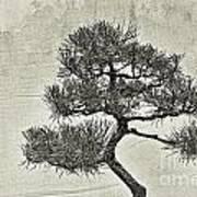 Black Pine Bonsai In Monochrome Art Print
