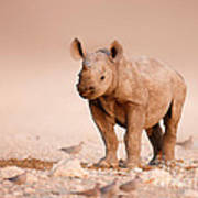 Black Rhinoceros Baby Art Print