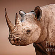 Black Rhinoceros Portrait Art Print