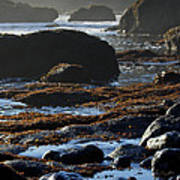Black Rocks Lichen And Sea  Art Print