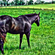 Black Stallion In Pasture Art Print
