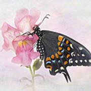 Black Swallowtail Iv Art Print