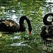 Black Swan Ballet Art Print