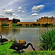 Black Swans At Leeds Castle II Art Print
