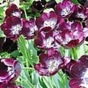 Black Tulips Art Print