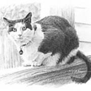 Black White Cat Pencil Portrait Art Print