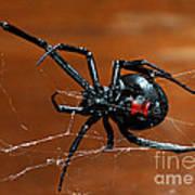 Black Widow Spider Art Print