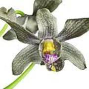 Black Yellow And Purple Orchid Art Print