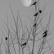 Blackbirds By The Moon Art Print