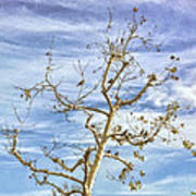 Blackbirds In A Tree Art Print