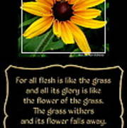 Blackeyed Susan With Bible Quote From 1 Peter Art Print