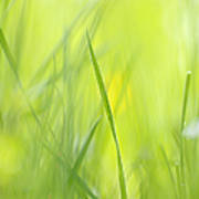 Blades Of Grass - Green Spring Meadow - Abstract Soft Blurred Art Print