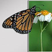 Blank Greeting Card 5 Art Print