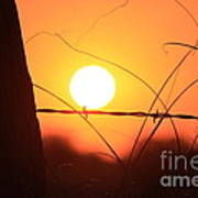 Blazing Orange Fence Line Sunset Art Print
