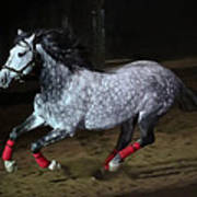 Blazzing Horse Art Print