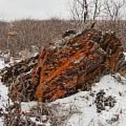 Bleak Winter Arctic Steppe Orange Lichens Rock Art Print