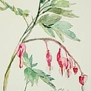 Bleeding Hearts IIi Art Print