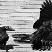 Blind Crow Art Print