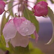 Blomming In The Rain Art Print