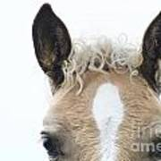 Blonde Horse Art Print