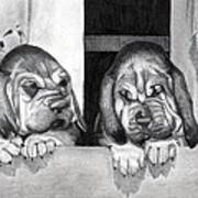 Bloodhound Puppies Dog Portrait  Art Print