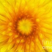 Bloom Of Dandelion Art Print