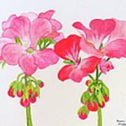 Blooming 1 Art Print