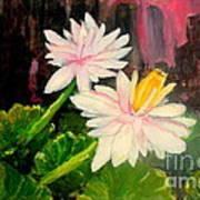Blooming At Night  Art Print