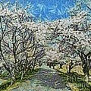 Blooming Cherry Tree Avenue Art Print