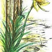 Blooming Daffodil Art Print