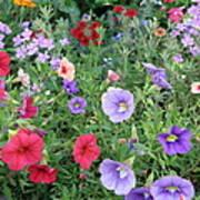 Blooming Extravaganza Art Print